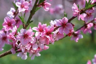 تدابیر فصل بهار